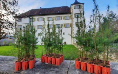 Gutes tun – Schlossteam pflanzt 1.000 neue Bäume